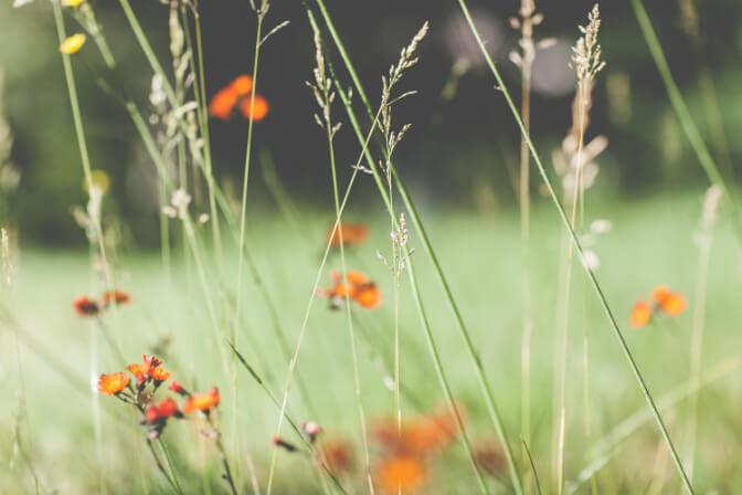 פרחים בקנה - תפילה